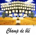 Champ de Blé - Arbre ascendant vierge 7 générations
