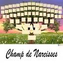Champ de Narcisses - Arbre ascendant vierge 7 générations